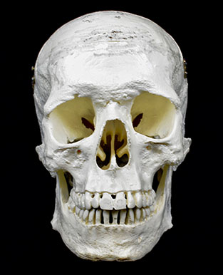hominid1
