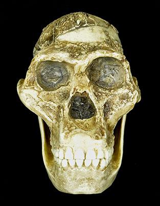 hominid3
